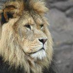 Conociendo a Leo: todo lo que debes saber
